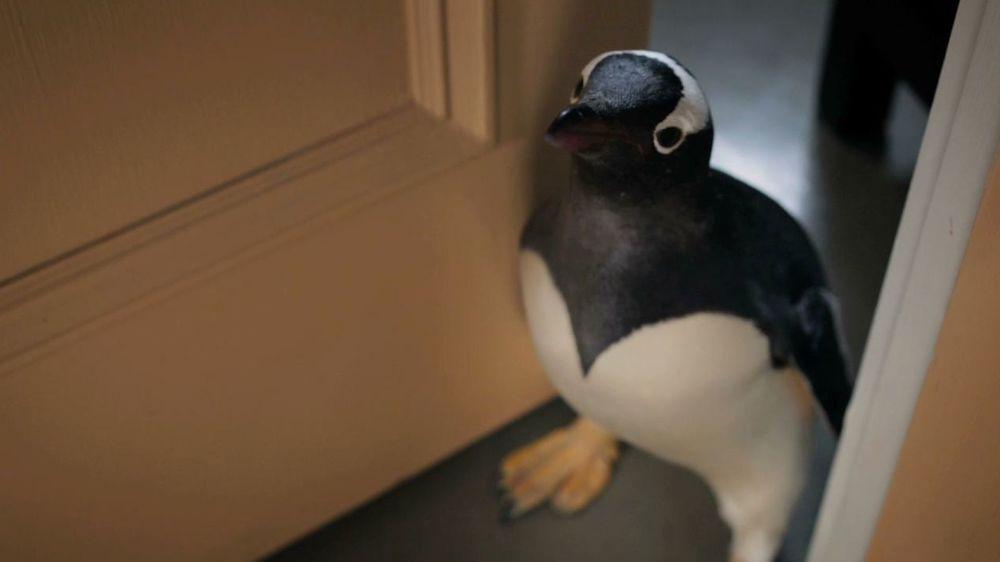 mister poppers pinguine