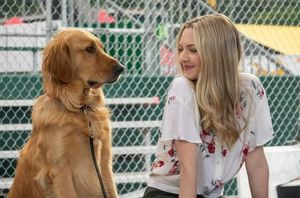 Enzo the Dog & Amanda Seyfried
