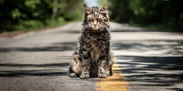 First Look Photos: Paramount's 'Pet Sematary'