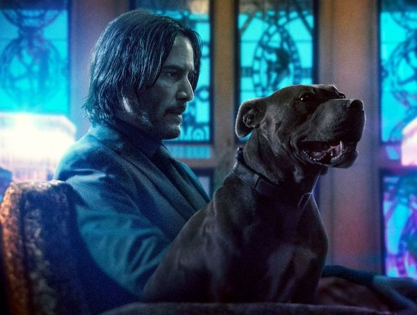 'John Wick: Chapter 3' Clip - A Dog's Way To The Continental