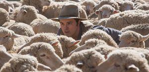 Seth MacFarlane amongst some sheep