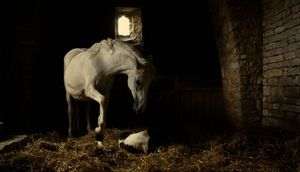 White horse giving birth in Michael Kohlhaas