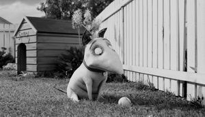 Frankenweenie with a ball in the yard
