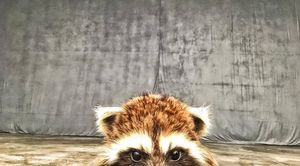 Rocket Racoon is back on set, James Gunn posts tease to Face