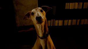 Joseph Gordon-Levitt gets a dog in 50/50