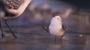 First look at Piper the bird, the adorable new character for