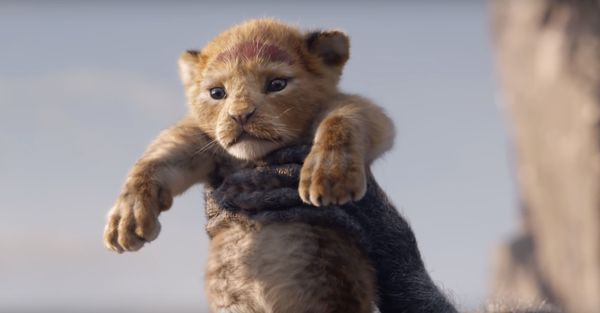 Boardwalk Round-Up: The Lion King, Toy Story 4, and Marvel Mania